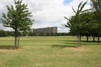 Medium burgess park4 original