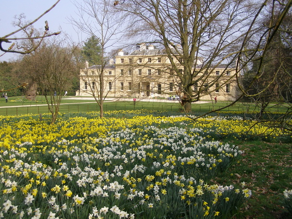 Daffodils, Shotover House