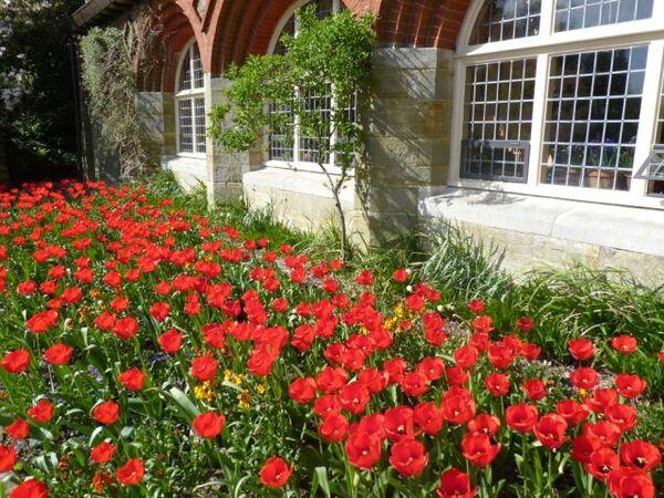 Tulips, Standen Garden
