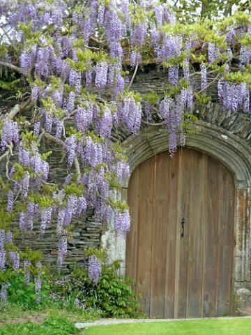 Wisteria, Garden House