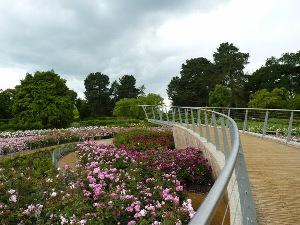 Rose Garden, The Savill Garden