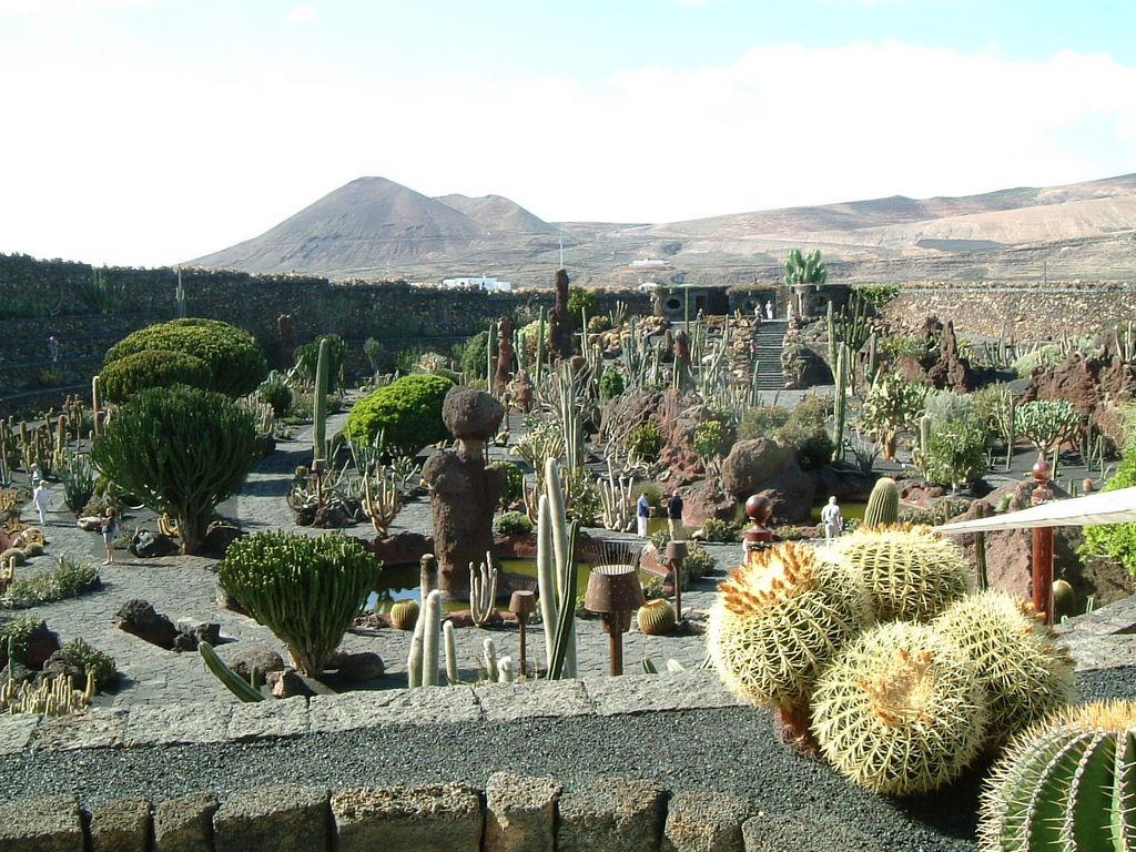 jardin de cactus - Jardn De Cactus