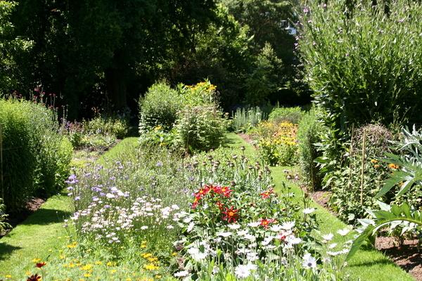Summer, Chelsea Physic Garden