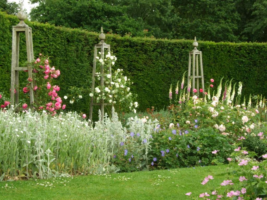 Roses In Garden: Waterperry Gardens