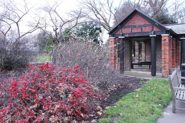 Ranelagh Gardens in Winter