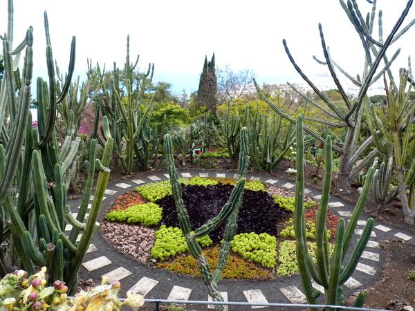 Cacti, Jardim Botanico da Madeira