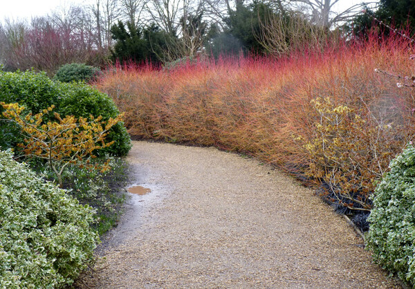 Anglesey Abbey Garden, Winter