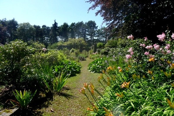 Lilies, Wyndcliffe Court Gardens