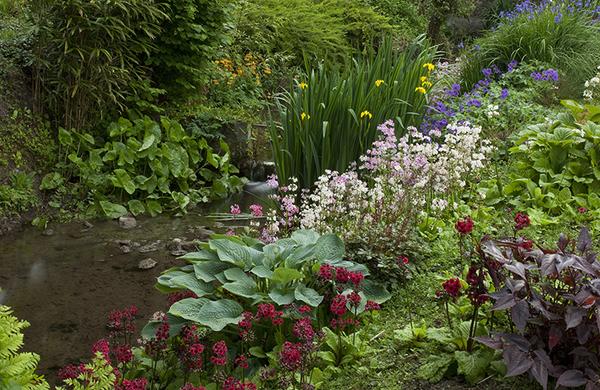 Stream, Burtown Gardens