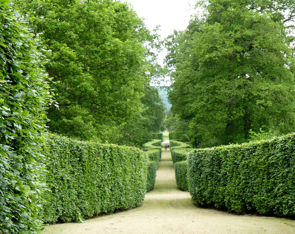 Hedge, Chatsworth