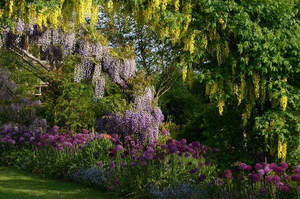 Wisteria Walk, Kathy Brown's Garden