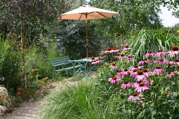 Kathy Brown's Garden, August