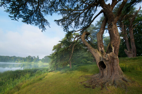 Harry Potter Tree, Blenheim Palace