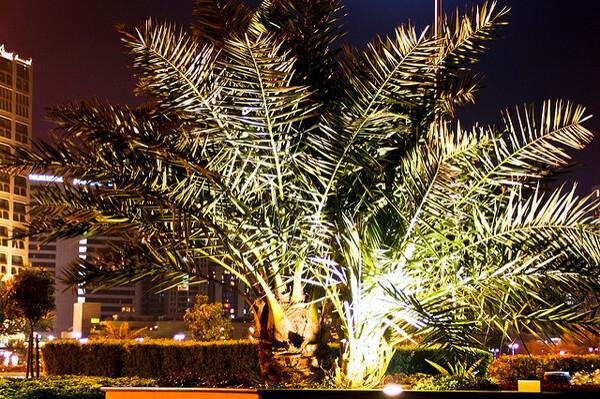 Abu Dhabi Corniche Park & Gardens