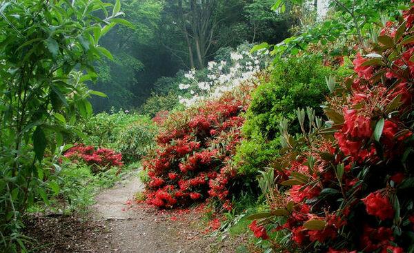Achamore Gigha garden