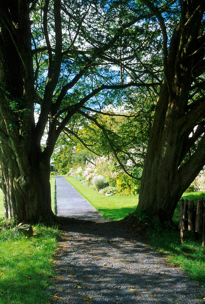 Border through yews, Loughcrew Gardens