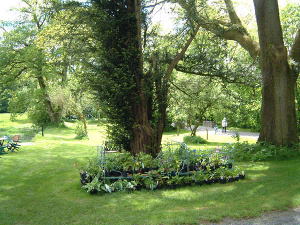 Plant sale and oak, Loughcrew Gardens