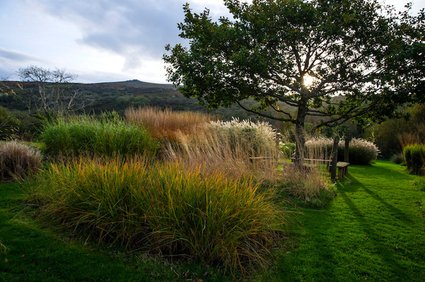 Grasses, Dyffryn Fernant Garden
