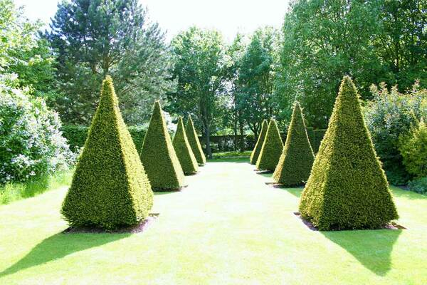 Topiary, Gotha Garden at Pembroke Farm
