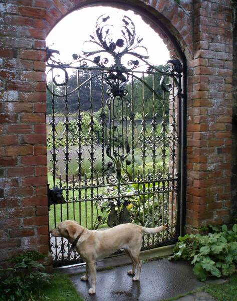Dog, Dunninald Garden