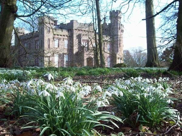 Snowdrops, Dunninald Castle