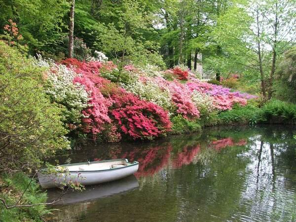 Azaleas by the pond, Lukesland Gardens