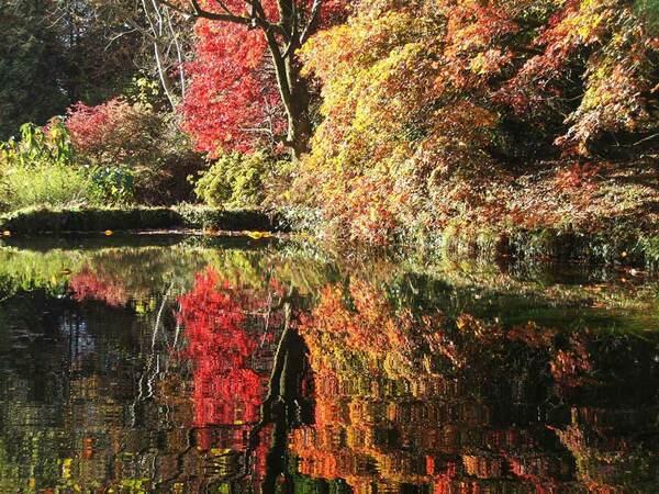 Autumn colour, Lukesland Gardens