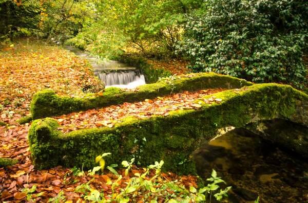 Bridge in Autumn, Lukesland Gardens