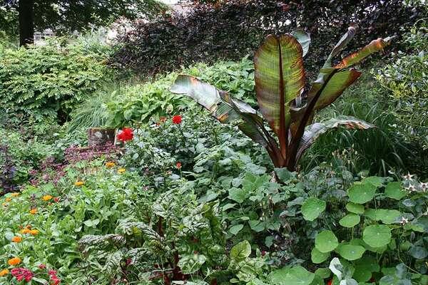Bosvigo Garden
