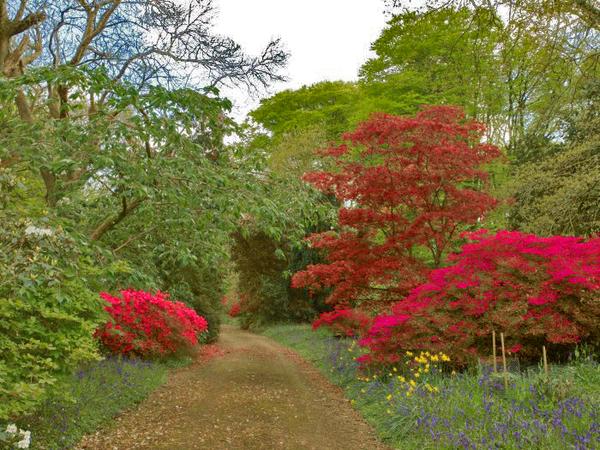 Burncoose Garden