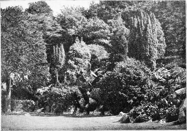 Pencarrow Garden