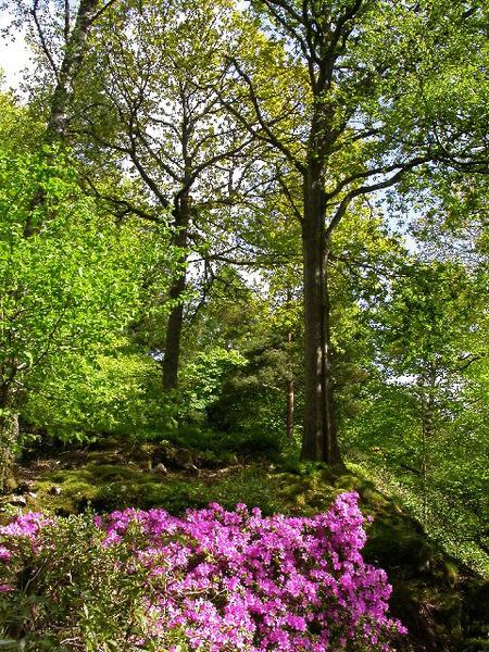 Stagshaw Garden