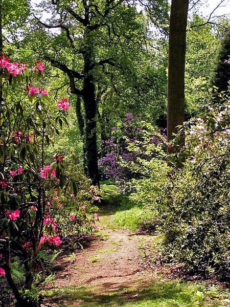 Lydney Park Garden