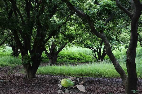 Pinjore Yadavindra Gardens
