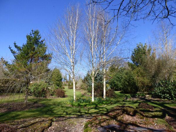 Llwyngarreg Garden, March