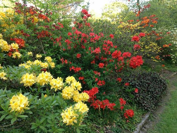 Llwyngarreg Garden in Spring