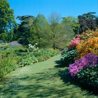 Medium sandringham garden original