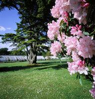 Culzean Castle Garden