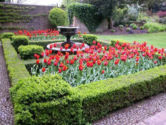 Fountain and Tulips, Bourton House Garden