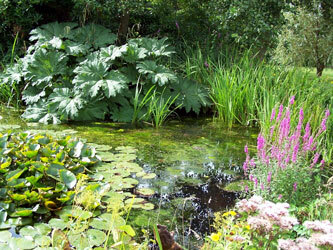 Pond, University of Leicester Botanic Garden
