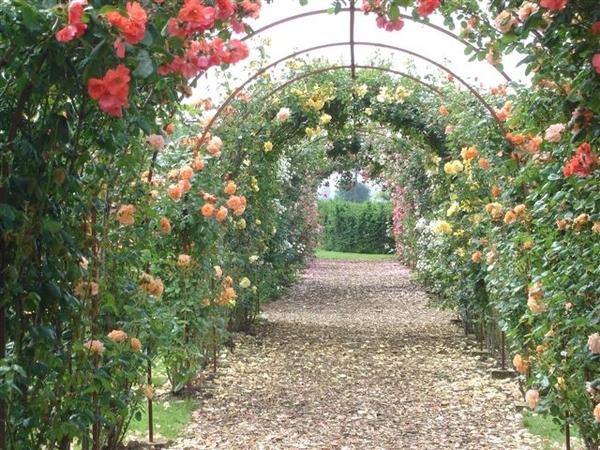 Roses, De Tuinen in Demen