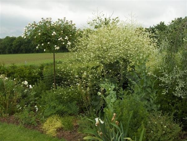 De Tuinen in Demen, Holland