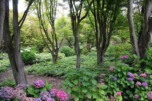 Christchurch botanic gardens for Landscape gardeners christchurch