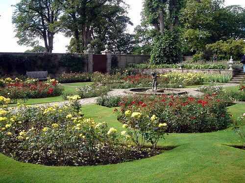 Roses at Lyme Park