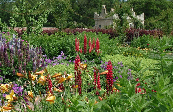 Lupins at Floors Castle Gardens