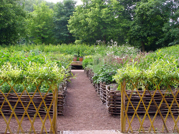 Live Willow Fence around Medicinal Beds