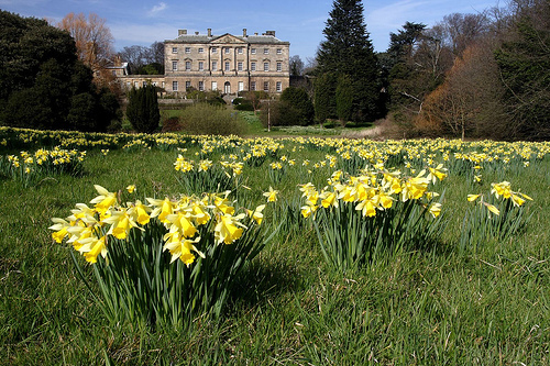 Howick Hall Gardens in Spring