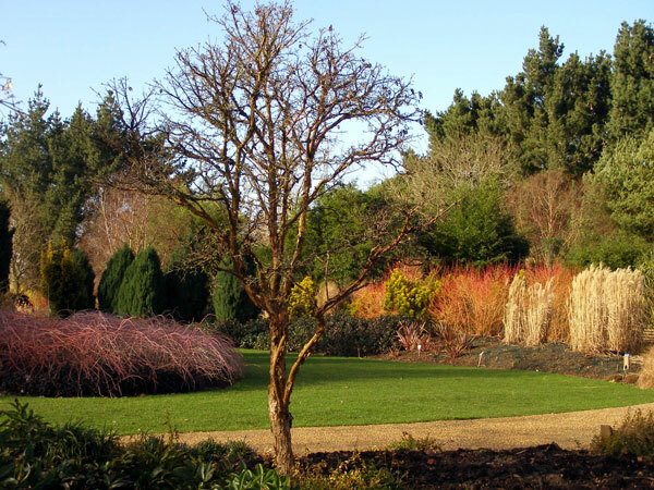 Winter Garden at Sir Harold Hillier Garden and Arboretum