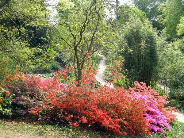 Japanese Azaleas, Sir Harold Hillier Garden and Arboretum