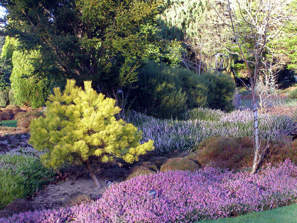 Sir Harold Hillier Garden and Arboretum in January
